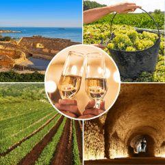 Tarragona Wineries Tour