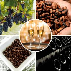 Chocolate Wine Tours from Barcelona
