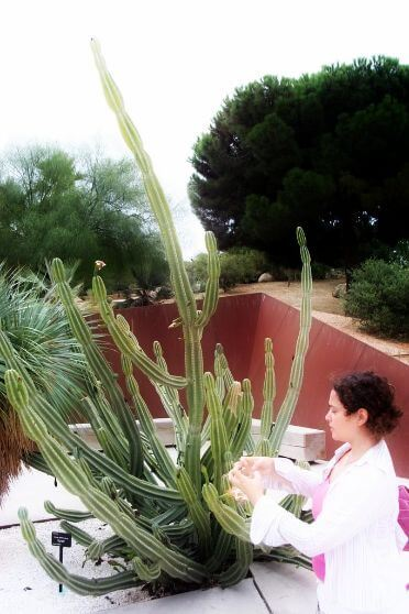 Guide giving explanations on a botanical tour in Barcelona