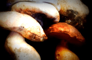 Fall Traditions: mushrooms hunting