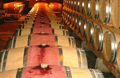 Wine barrels in the Basque Country