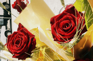 Red roses for April 23 Holiday: Saint George Day