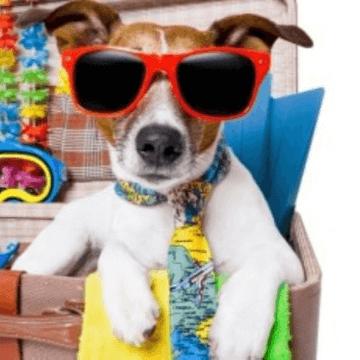 Cute dog with sunglasses like a tourist