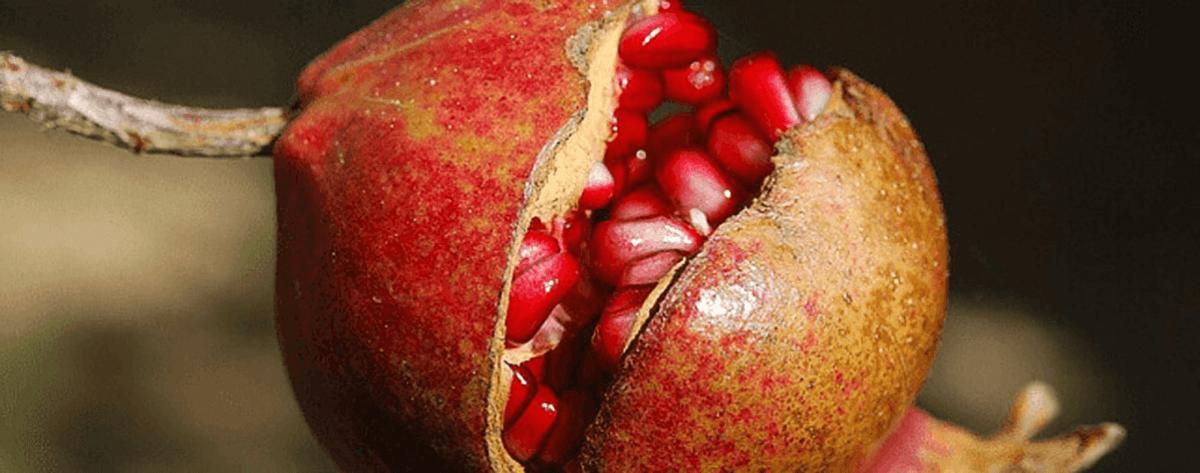 Winter fruit and vegetables Spain | ForeverBarcelona