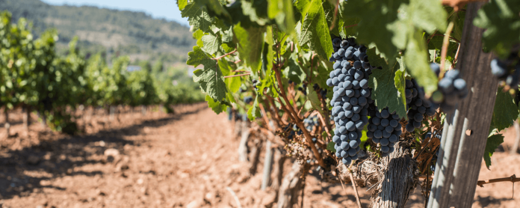 Best Barcelona Vineyards | ForeverBarcelona