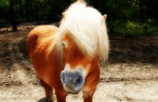 Barcelona Activities for Children with Animals: Ponies!