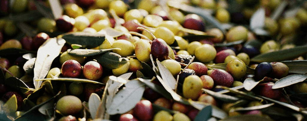 Types of Olives Spanish