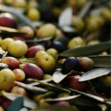 Different Types of Olives Spanish